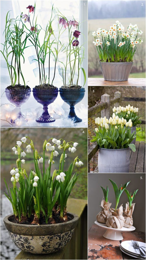 Spring bulbs..a wonderful way to brighten up your garden, entrance or kitchen table