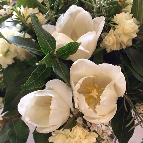 White-tulips-Flowerona