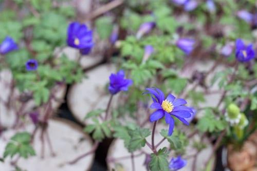 Bering-Flowers-Copenhagen-Denmark-Florist-Flowerona