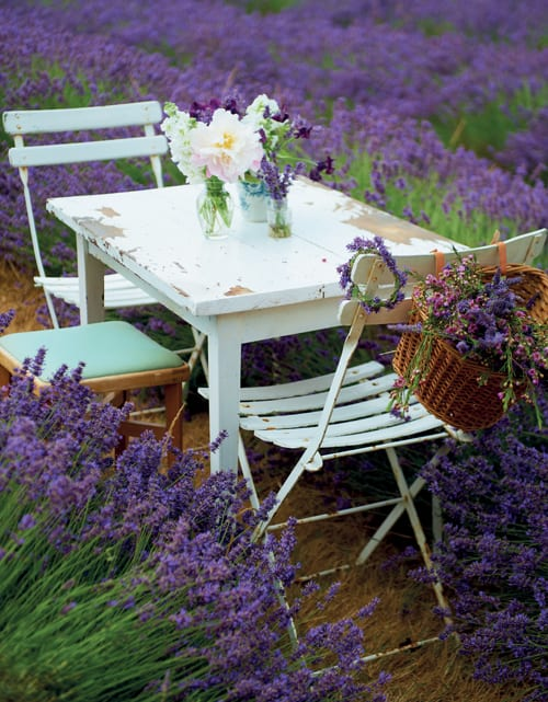 Selina-Lake-Outdoor-Living-Flowerona