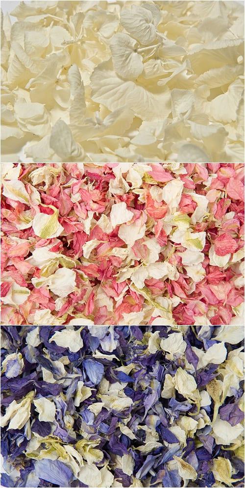Shropshire-Petals-Flowerona