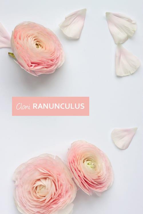 Cloni-Ranunculus-Flowerona