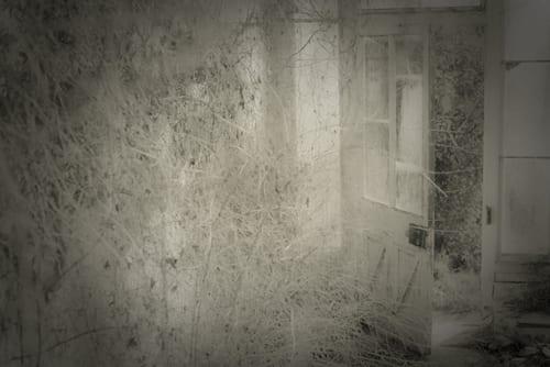 Pentillie_09-463-Rachel-Warne-Flowerona