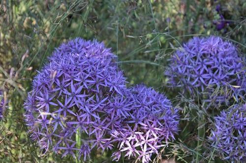 Cloudy-Bay-Sensory-Garden-RHS-Chelsea-Flower-Show-2014-Rona-Wheeldon-Flowerona-1