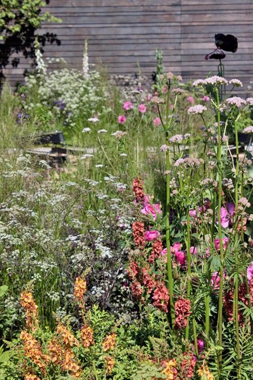 Cloudy-Bay-Sensory-Garden-RHS-Chelsea-Flower-Show-2014-Rona-Wheeldon-Flowerona-5