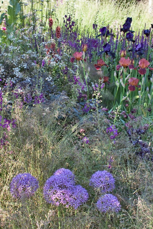 Cloudy-Bay-Sensory-Garden-RHS-Chelsea-Flower-Show-2014-Rona-Wheeldon-Flowerona-7