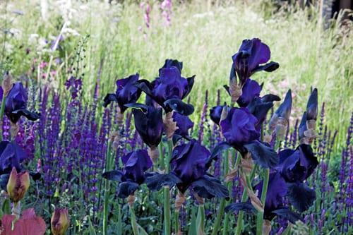 Cloudy-Bay-Sensory-Garden-RHS-Chelsea-Flower-Show-2014-Rona-Wheeldon-Flowerona-8
