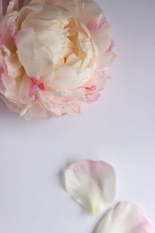 Gardenia-Peony-Flowerona-1