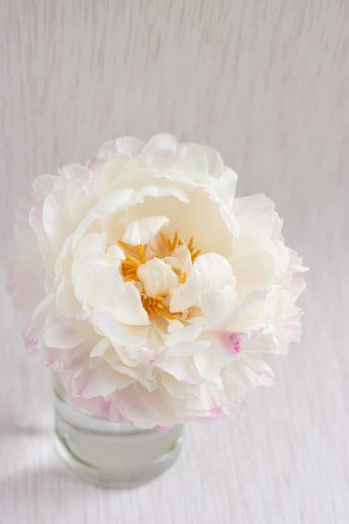 Gardenia-Peony-Flowerona-5