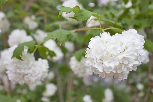 Jo-Thompson-Fresh-Garden-London-Square-RHS-Chelsea-Flower-Show-2014-Flowerona-3