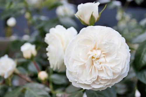 Jo-Thompson-Fresh-Garden-London-Square-RHS-Chelsea-Flower-Show-2014-Flowerona-4