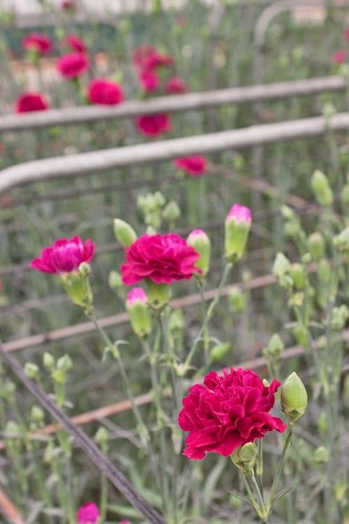 Marks-&-Spencer-Stand-RHS-Chelsea-Flower-Show-2014-Flowerona-1