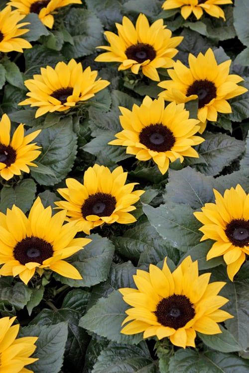 Marks-&-Spencer-Stand-RHS-Chelsea-Flower-Show-2014-Flowerona-4