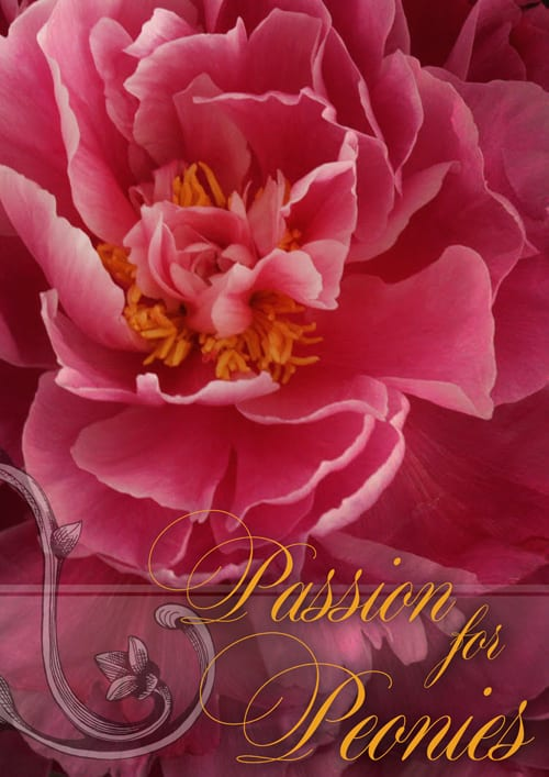 Neill-Strain-Passion-for-Peonies-2014