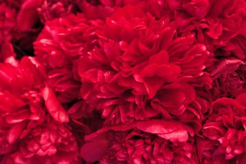 Neill-Strain-Passion-for-Peonies-Chelsea-Fringe-2014-Flowerona-11