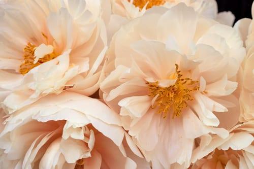 Neill-Strain-Passion-for-Peonies-Chelsea-Fringe-2014-Flowerona-3