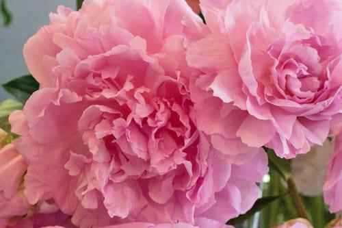 Neill-Strain-Passion-for-Peonies-Chelsea-Fringe-2014-Flowerona-4