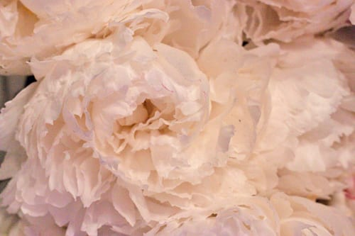 Neill-Strain-Passion-for-Peonies-Chelsea-Fringe-2014-Flowerona-7