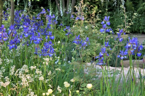 The-Homebase-Garden-Adam-Frost-RHS-Chelsea-Flower-Show-2014-Flowerona-3