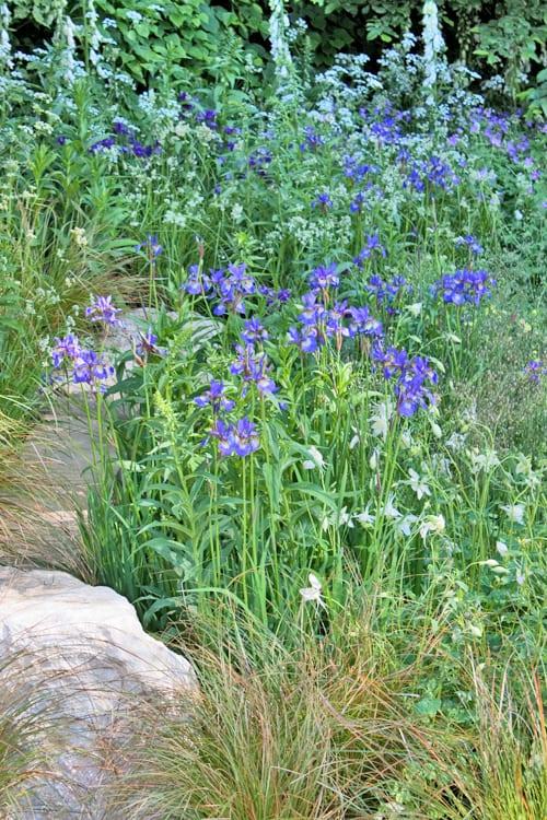 The-Homebase-Garden-Adam-Frost-RHS-Chelsea-Flower-Show-2014-Flowerona-9