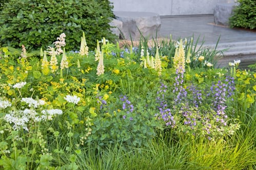 The-Laurent-Perrier-Garden-Luciano-Giubbilei-RHS-Chelsea-Flower-Show-2014-Flowerona-1