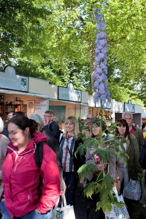 The-Sell-Off-RHS-Chelsea-Flower-Show-2014-Flowerona-1
