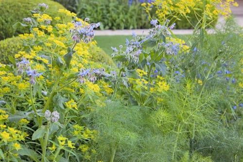 The-Telegraph-Garden-Tommaso-del-Buono-&-Paul-Gazerwitz-RHS-Chelsea-Flower-Show-2014-Flowerona-2