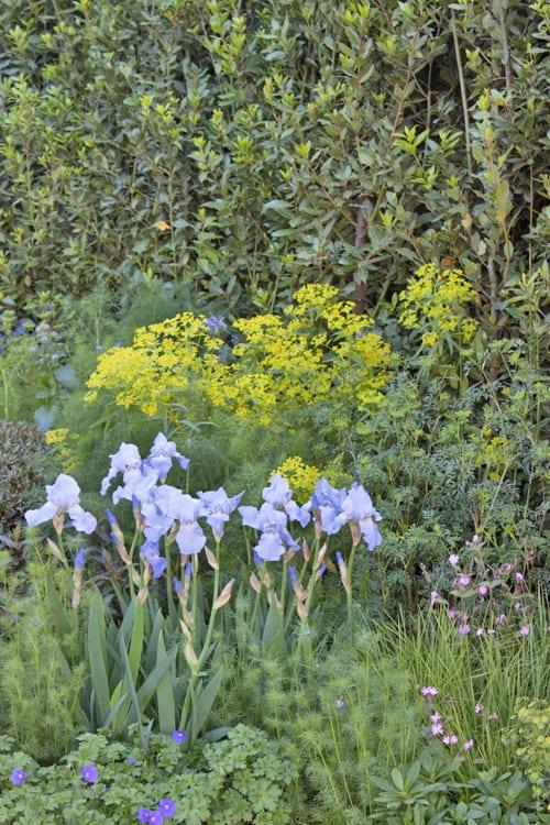 The-Telegraph-Garden-Tommaso-del-Buono-&-Paul-Gazerwitz-RHS-Chelsea-Flower-Show-2014-Flowerona-7