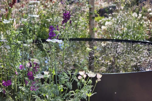 Vital-Earth-The-Night-Sky-Garden-David-Rich-&-Harry-Rich-RHS-Chelsea-Flower-Show-2014-Flowerona-6