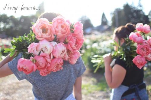 Floret-Flower-Farm-Peonies-b