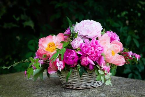 Katie-Spicer-Photography-Flowerona-May-Peony-4