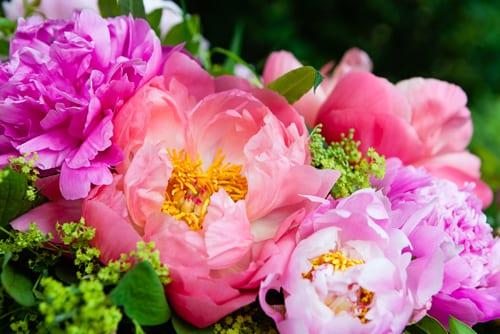 Katie-Spicer-Photography-Flowerona-May-Peony-5