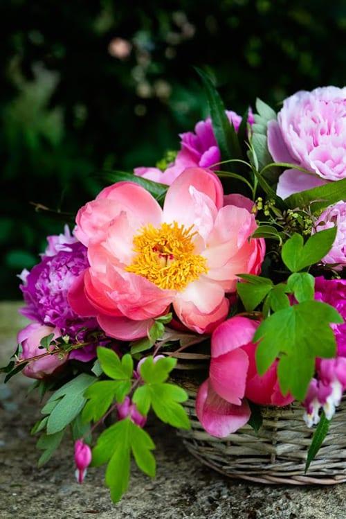 Katie-Spicer-Photography-Flowerona-May-Peony-6