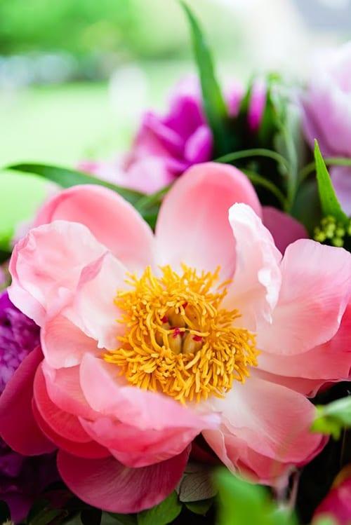 Katie-Spicer-Photography-Flowerona-May-Peony-7
