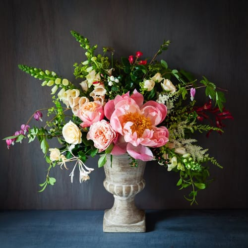 Flower of the Month – The Peony…A guest post by Katie Spicer, in collaboration with Sabine Darrall