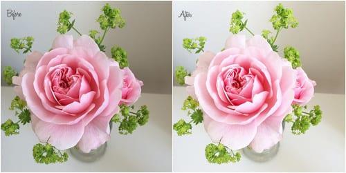 Pink-Rose-Flowerona-1