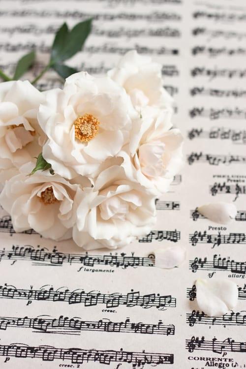 White-Majolica-Flowerona-2