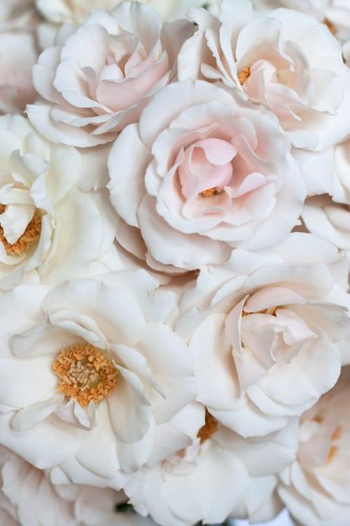 White-Majolica-Flowerona-3