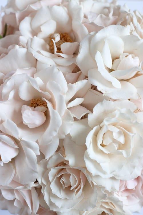 White-Majolica-Flowerona-5