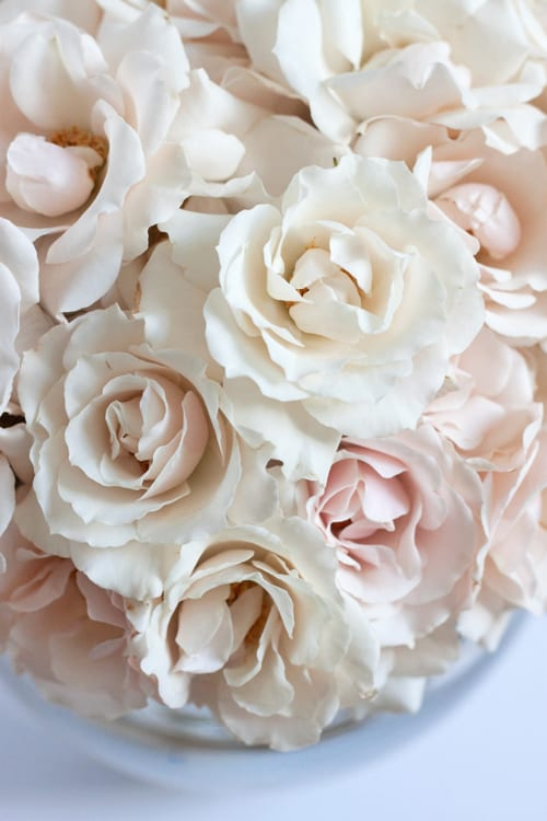 White Majolica…one of my favourite spray roses