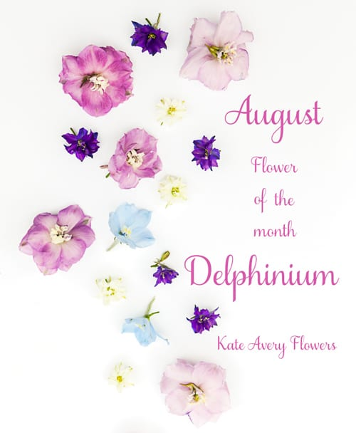 Flower of the Month – The Delphinium…A guest post by Katie Spicer, in collaboration with Kate Avery