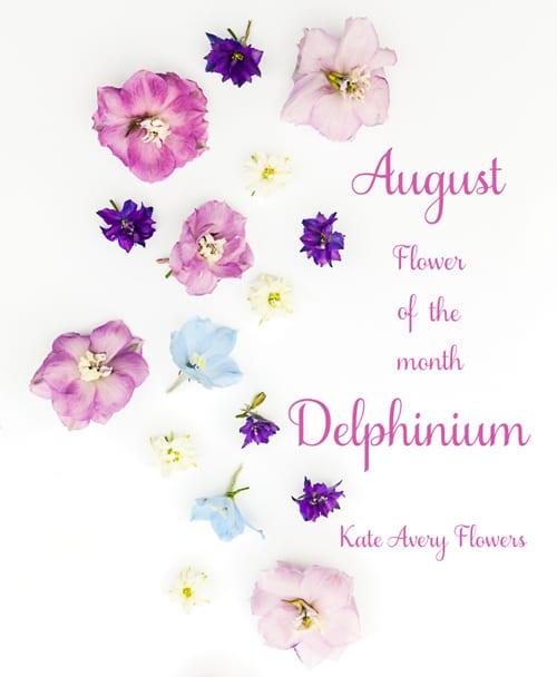 Flowerona-Kate-Avery-Delphinium-1