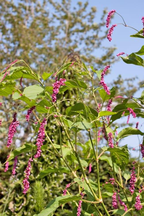Glyndebourne-Flowerona-4