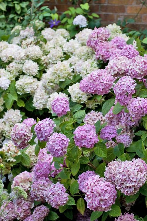 Glyndebourne-Flowerona-6