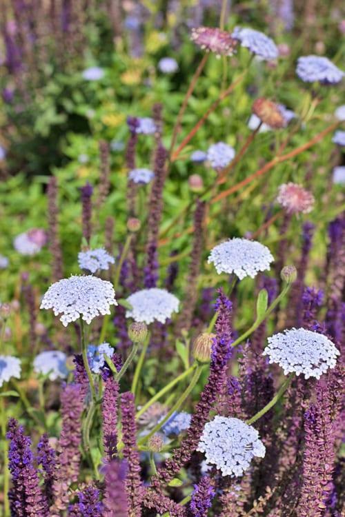 Glyndebourne-Flowerona-9
