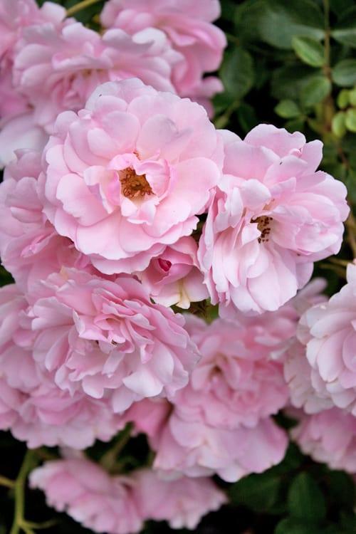 Loseley-Park-Gardens-Flowerona-10