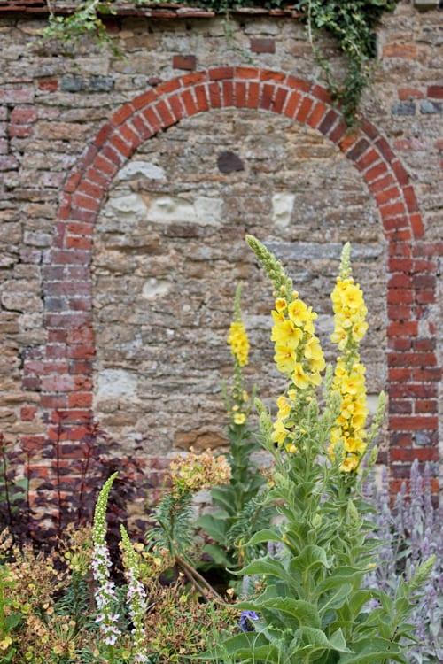 Loseley-Park-Gardens-Flowerona-11