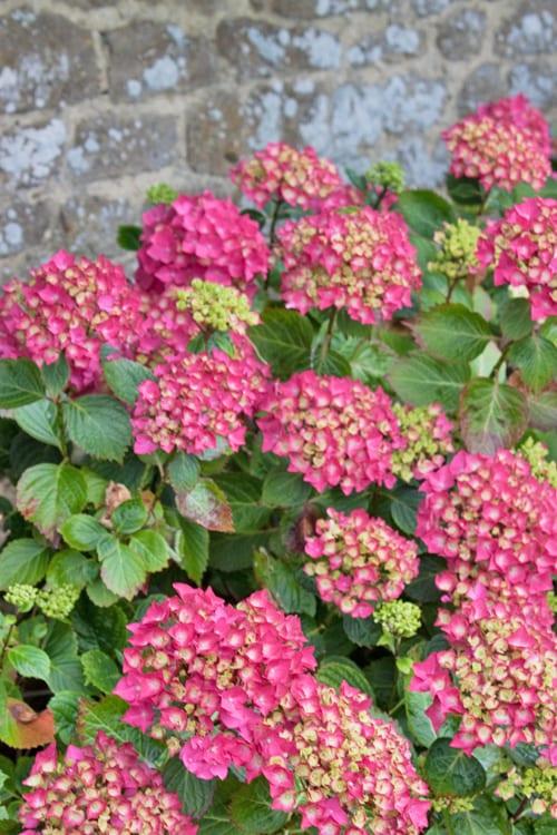 Loseley-Park-Gardens-Flowerona-15
