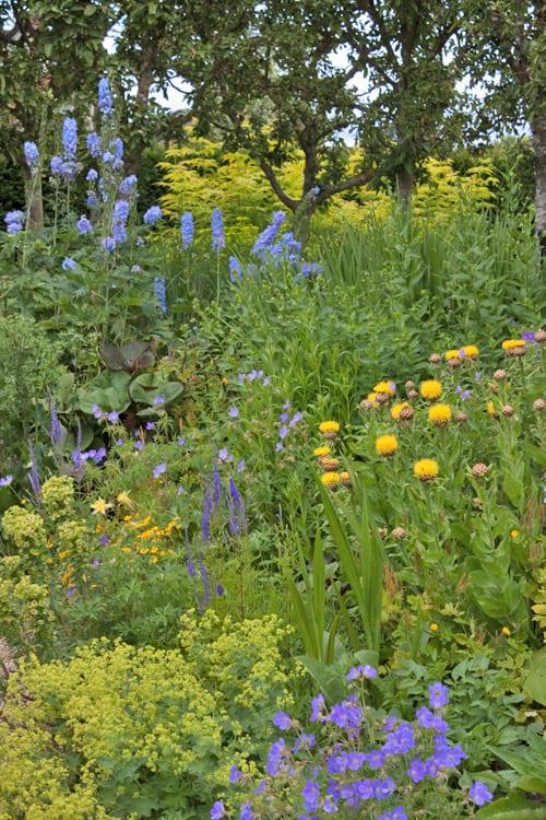 Loseley-Park-Gardens-Flowerona-5