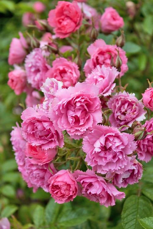 Loseley-Park-Gardens-Flowerona-7a